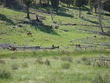 Wraith Falls Trail - Yellowstone - Wyoming - USA