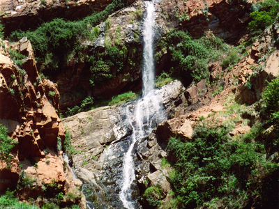 Waterfall In Witwatersrand National Botanical Gardens