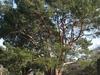 Wattle Parks