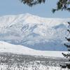 White Mtn Xmas Snow Past Trees