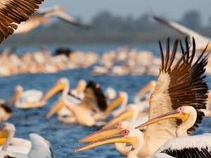 The Wild Paradise of the Danube Delta Photos