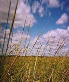 Wild Rice Highest Productivity Species