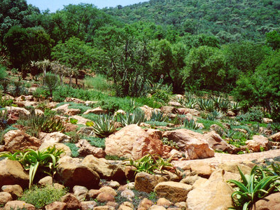 Witwatersrand National Botanical Gardens