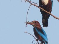 Shivapuri National Park Bird!