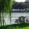Xuanwulake Willows