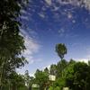 Yercaud Nature