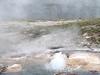 Young Hopeful Geyser - Yellowstone - USA