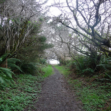Yurok Loop Trail