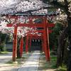 Yoshida Torii At Cherry Blossom Time