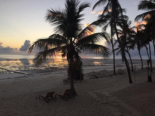 Zanzibar Excursion Trips - Dolphin Tours & Jozani Forest Photos