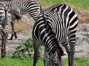 Safari Day Tour Lake Manyara Fotos
