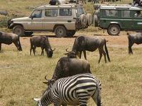 6 Days Group Join Safaris - Tanzania