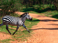 Lake Mburo National Park Safari