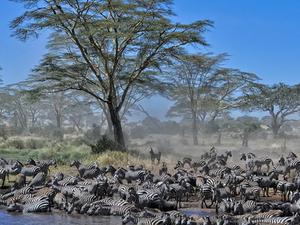 5 Day Tanzania Tented Camp Safari Photos