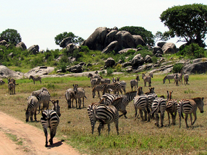 Serengeti National Park Travel Leads