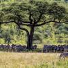 4 Day Tanzania Lodge Safari