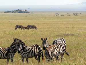 Experience Serengeti Camping Safaris Photos