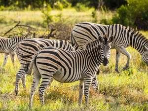 5 Day Botswana Safari Photos