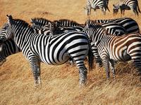Masai Mara Trip