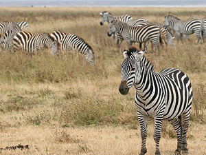 13 Day Kilimanjaro & Safari Photos
