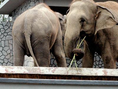 Zoo Johor - Johor Bahru