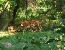 Zoo At Vapi