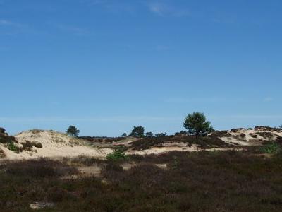 Zand     Drents   Friese  Wold