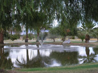 Oasis Palms Rv Park
