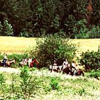 Milo McIver State Park Campground