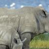10 Days Uganda Highlights  (Gorillas & Chimps)  Wildlife Safari