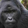 15 Uganda best safari