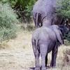 16 Days Uganda Total safari