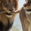 3 Day Wildlife Safari Exploring Queen Elizabeth National Park, Uganda