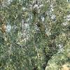 Apulia: 2-hour extra virgin olive oil tasting