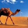 Bedouin dinner and camel ride in Sharm desert