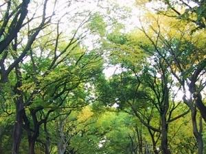 Central Park Americas Masterpiece Walking Tour(2 Hours) Photos