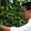 Coffee farm day trip from Bogota