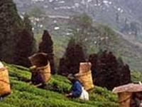 Darjeeling tour 3 nights/4 days