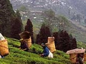 Darjeeling tour 3 nights/4 days Photos