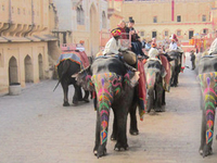 Explore Amber Fort with Morning Royal Elephant ride and View of JalMahal