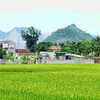 Farming Experience with Homestay