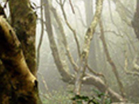 Fray Jorge National Park Tour & Del Encanto Valley