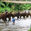 Full Day Elephant Safari And Bamboo Rafting At Chiang Dao From Hotel Inside Chiang Mai City Only