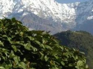 Ghorepani Poonhill Trek Photos