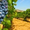 Great vineyards tour