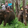 Half Day Elephant Trekking And Riding