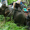 Half Day Program A-Elephant Trek 60Mins