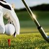 Ha Noi Golf Tour