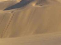Living Desert (half day tour)