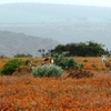 Namaqualand Flower Tour